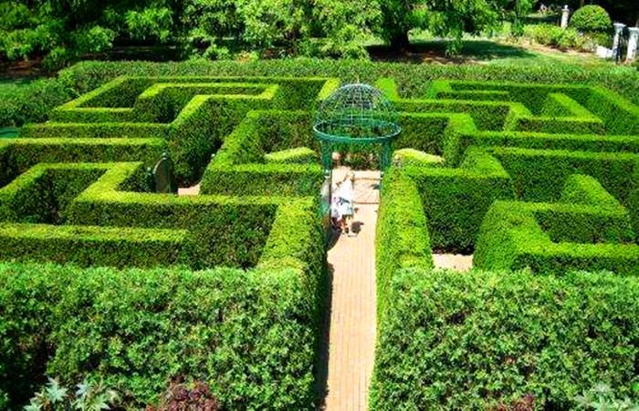 丛林迷宫1.jpg