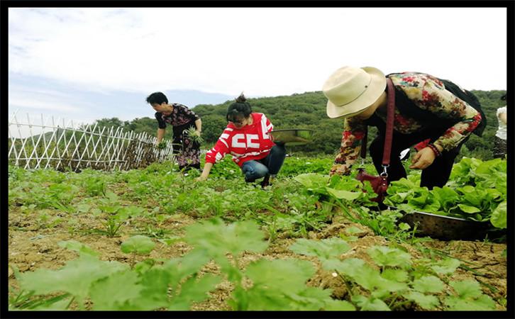 武汉农家乐采摘